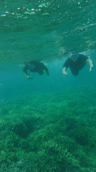 サンゴ群落の上をすいすい泳いでいます