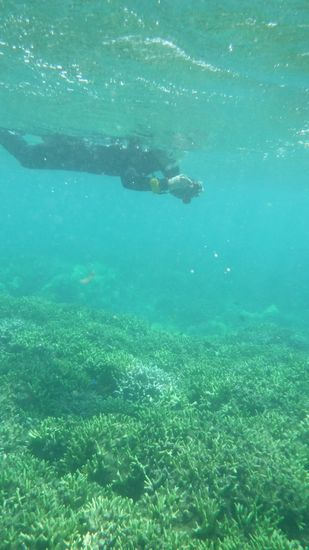 水中カメラでサンゴを楽しんでいるK林さん。