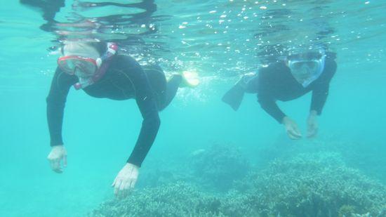 すいすい泳ぐお父さんとお母さんです。