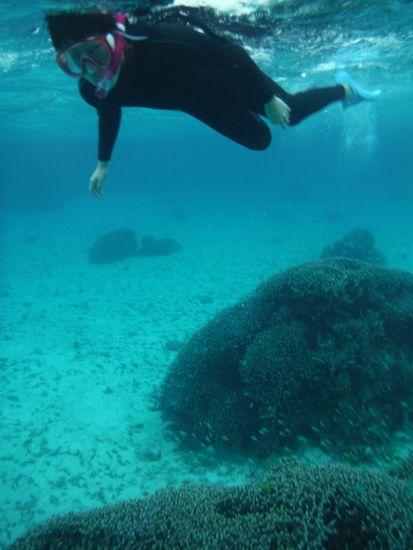 透明度の高い海をすいすい泳ぎます