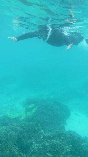 旦那さん、ハイペースで泳ぎまわっています。
