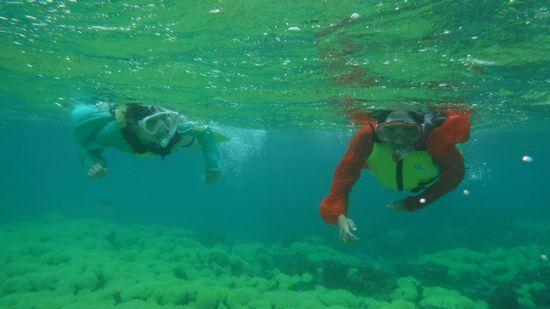 慣れれば楽しそうに泳ぐお二人です。