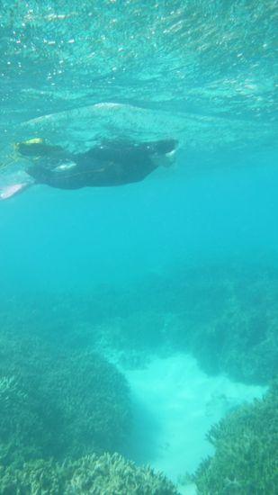 A野さん、すいすい泳いでいます。