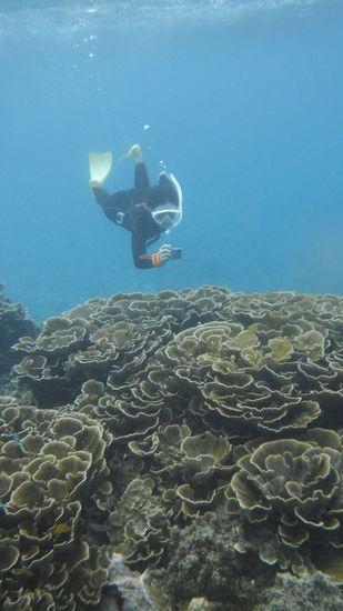 マイタケサンゴを潜る!