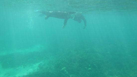 サンゴをじっくり観察されています。
