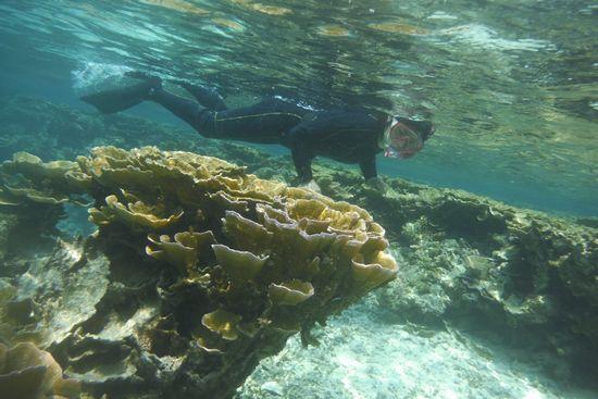 素潜りだけじゃなくサンゴも楽しみました