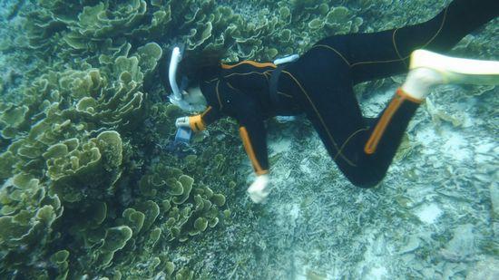 シャコガイを見つけて潜る!