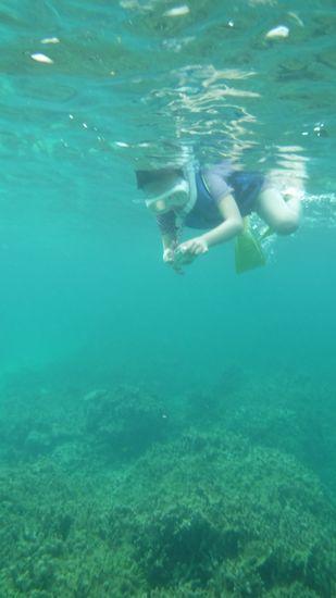 水中カメラで撮影しているツムギちゃん