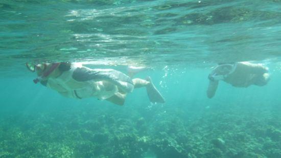 お父さん、お母さんも楽勝の泳ぎです。