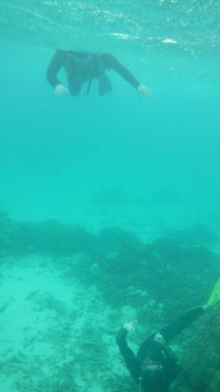 素潜りしながら、水中写真を撮る奥さん