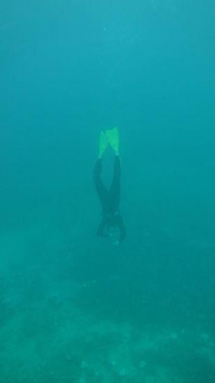 素潜りドボン、深い深いところまで潜っています。
