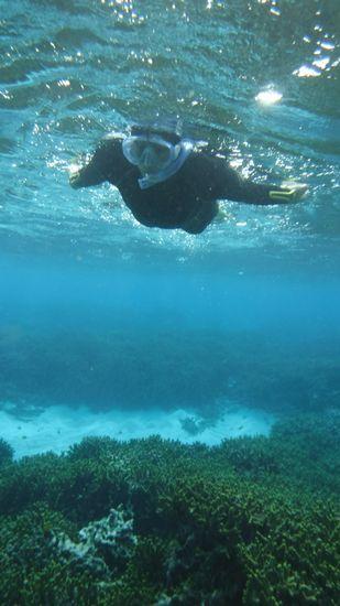 サンゴの上をすいすいのS野さん