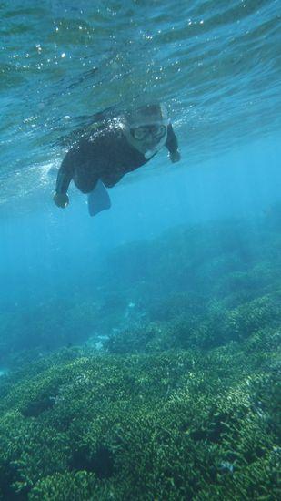 透明度抜群の中、泳いでいます