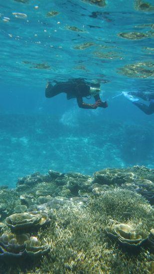 水中カメラに没頭のO谷さんです