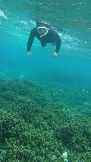 サンゴ群落を楽しんでいます♪