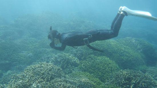 サンゴの上をすーいすいです