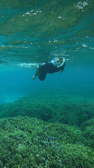サンゴを楽しんでいる奥さん。