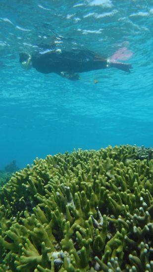 サンゴの上をすーいすい泳いでいます♪