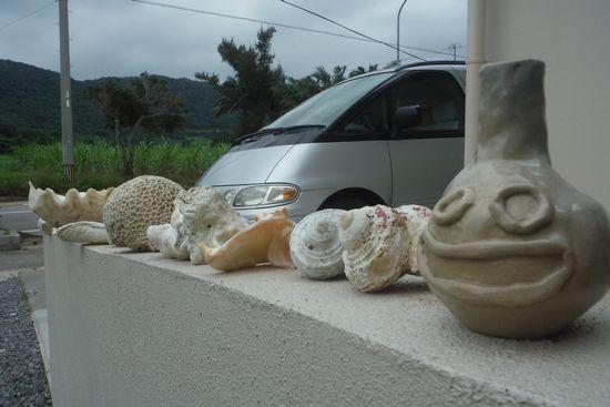 ビーチで拾ったサンゴたち