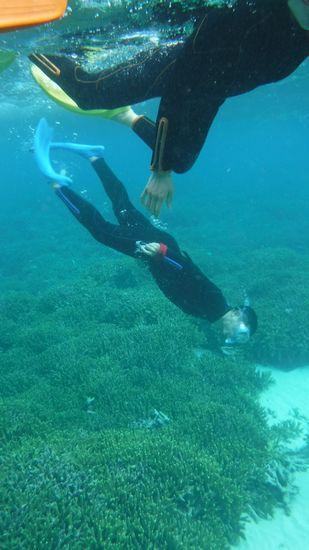 サンゴが広がると素潜りドボンです