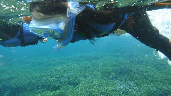 アオイちゃん、ハルカちゃんは、すいすい泳ぎます