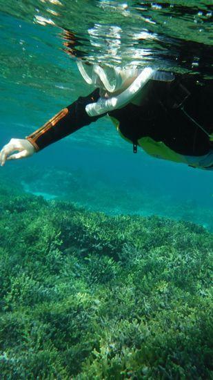 サンゴ群落を楽しむお母さんです。