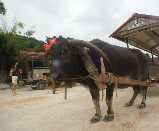 水牛に乗って観光ガイド