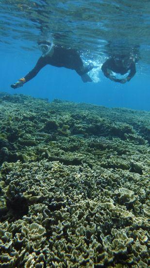 カメラを構えてマイタケサンゴを楽しんでいるO賀さんとS畝さんです。