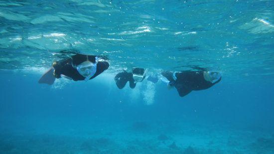 皆さんすいすい泳ぎまわっています。