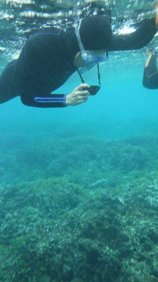水中カメラでクマノミ撮影を楽しむ旦那さんです。