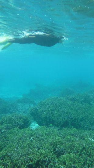 余裕の泳ぎでサンゴを楽しんでいる奥さんです。