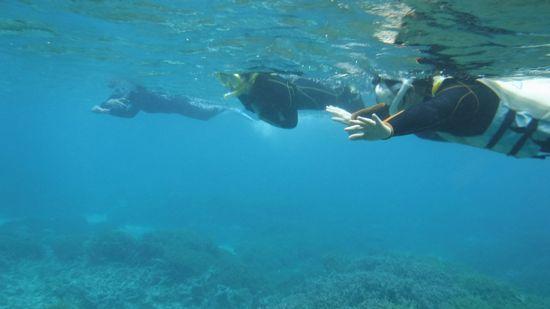 サンゴの上をすいすい泳いでいます