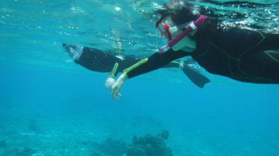 余裕お泳ぎで海を楽しんでいらっしゃいます。
