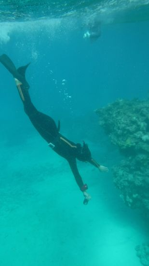 慣れた泳ぎで素潜りドボンです。