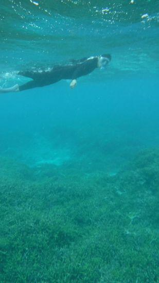 かなり鍛えている泳ぎです。