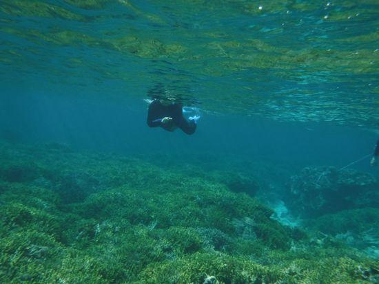 I田さんもすぐに水中観察モードです