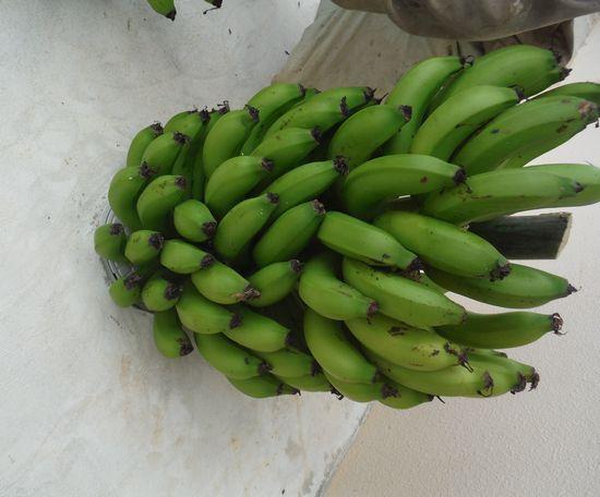 バナナ。まるごとです