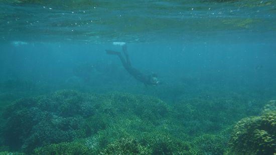 サンゴ群落を楽しんでいるI嵐さんです