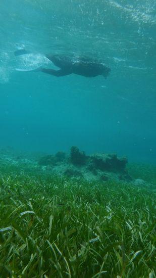藻場を進んでいきます