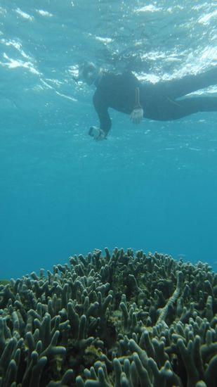 サンゴも楽しんで。