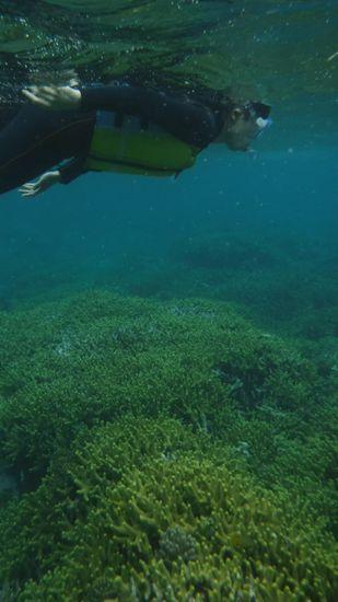 サンゴ群落が広がって、パラダイスです