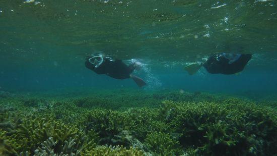 サンゴは、すぐ目の前です♪