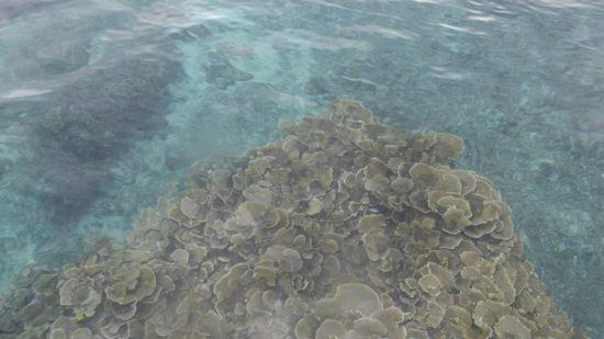 のっぺりプールみたいな海です
