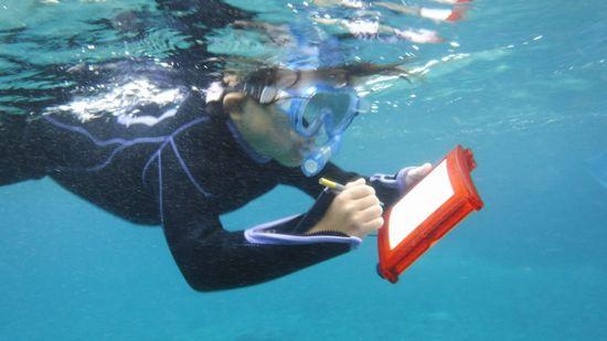 いつも通り、水中ノートにお絵かきです
