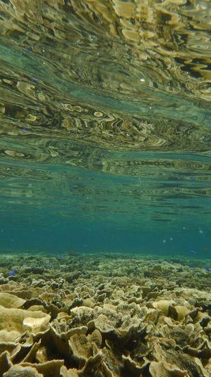 水中はこんな感じです