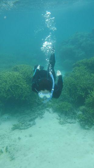 サンゴの隙間をすーいすいです。