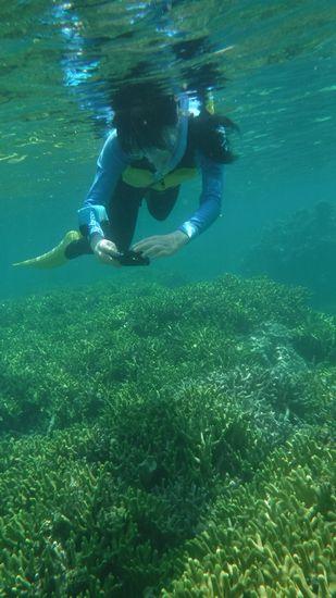 サンゴ群落を楽しんで撮影です。