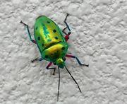 てかてかのキレイな虫です!
