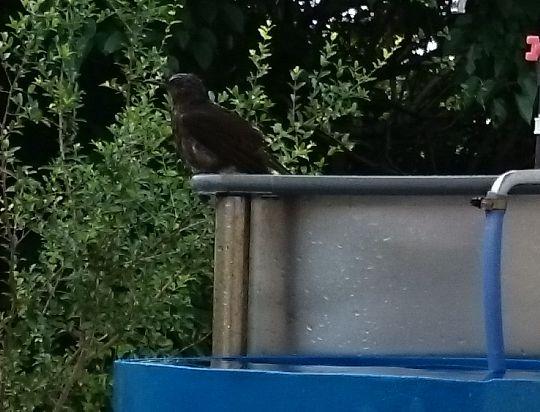 水浴びしている鳥さん