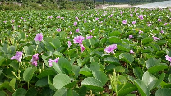 ビーチ際にきれいな花